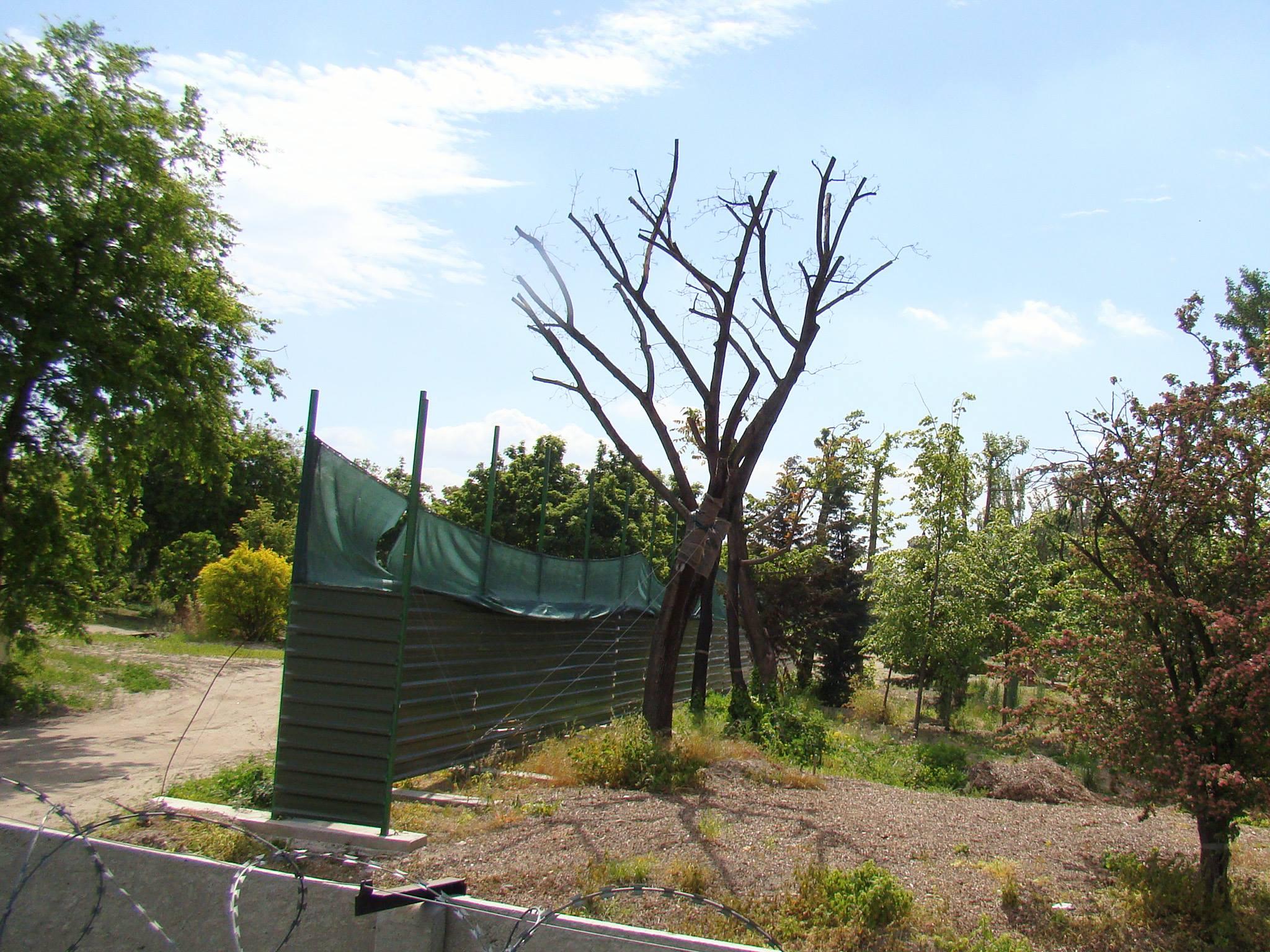 A Vidámparkból átültetett fák állapota idén májusban